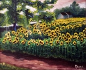 morning at sunflowers
